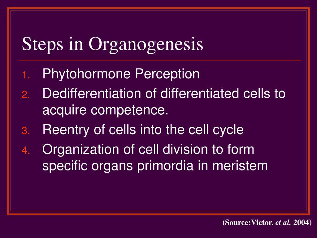 Steps in Organogenesis