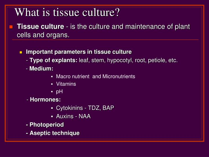 What is tissue culture
