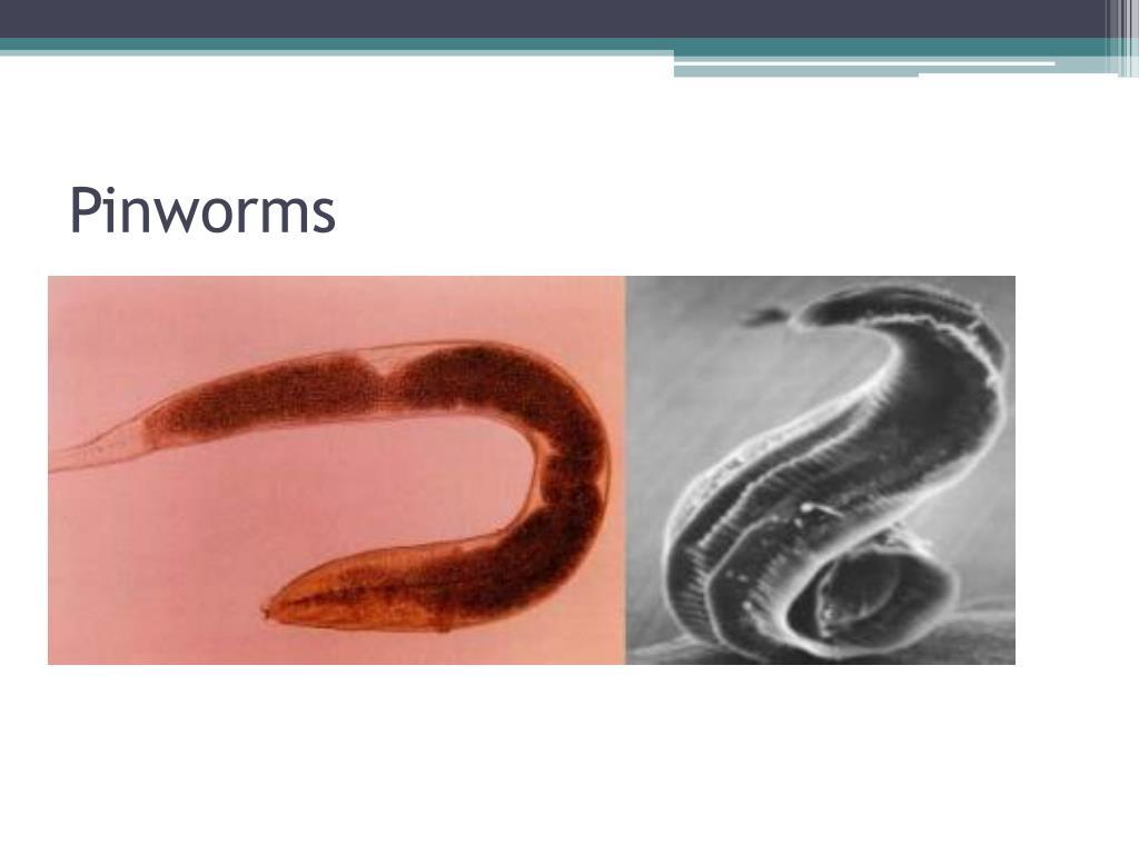 PPT - Parasites PowerP...