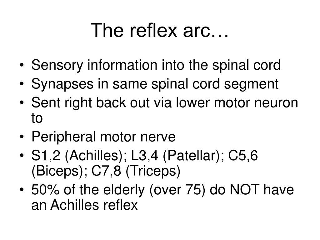 The reflex arc…