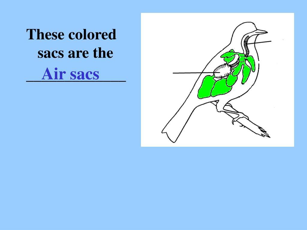 Air sacs
