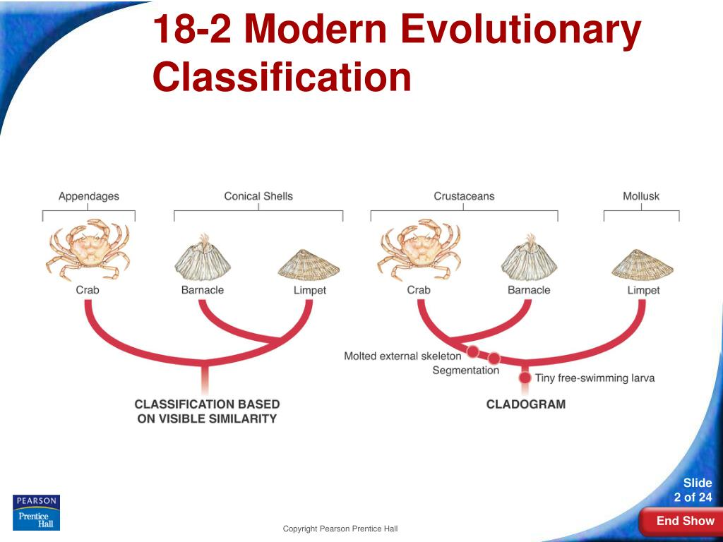 18-2 Modern Evolutionary Classification