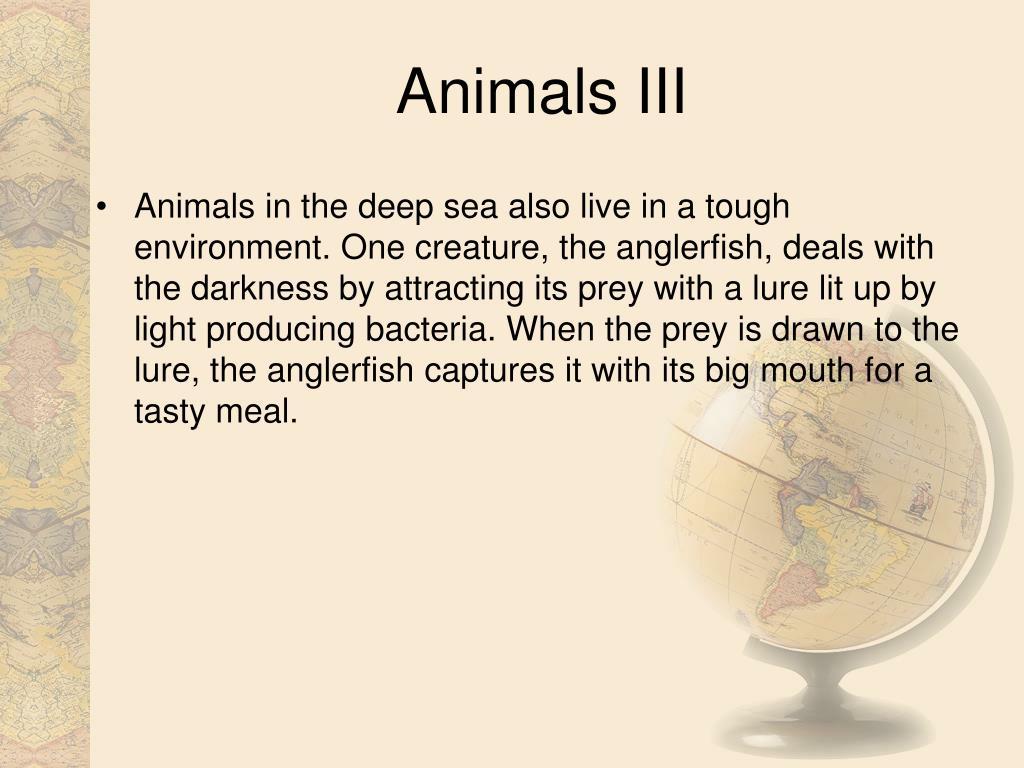 Animals III