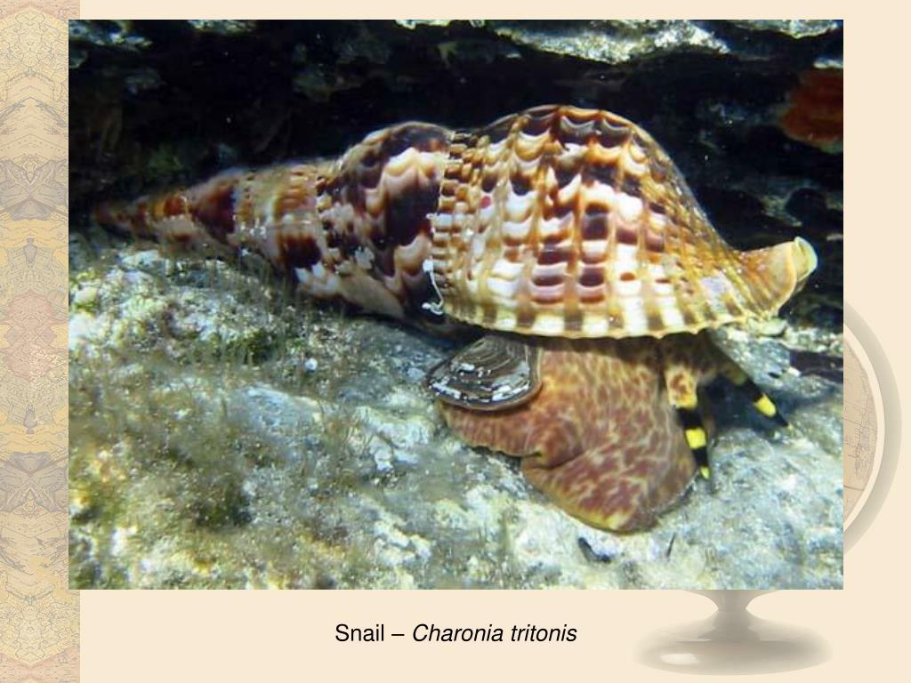 Snail –