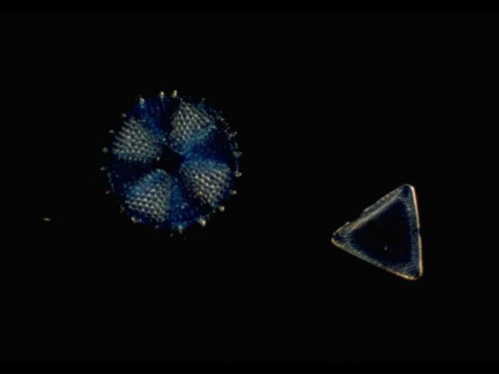 12. Diatoms