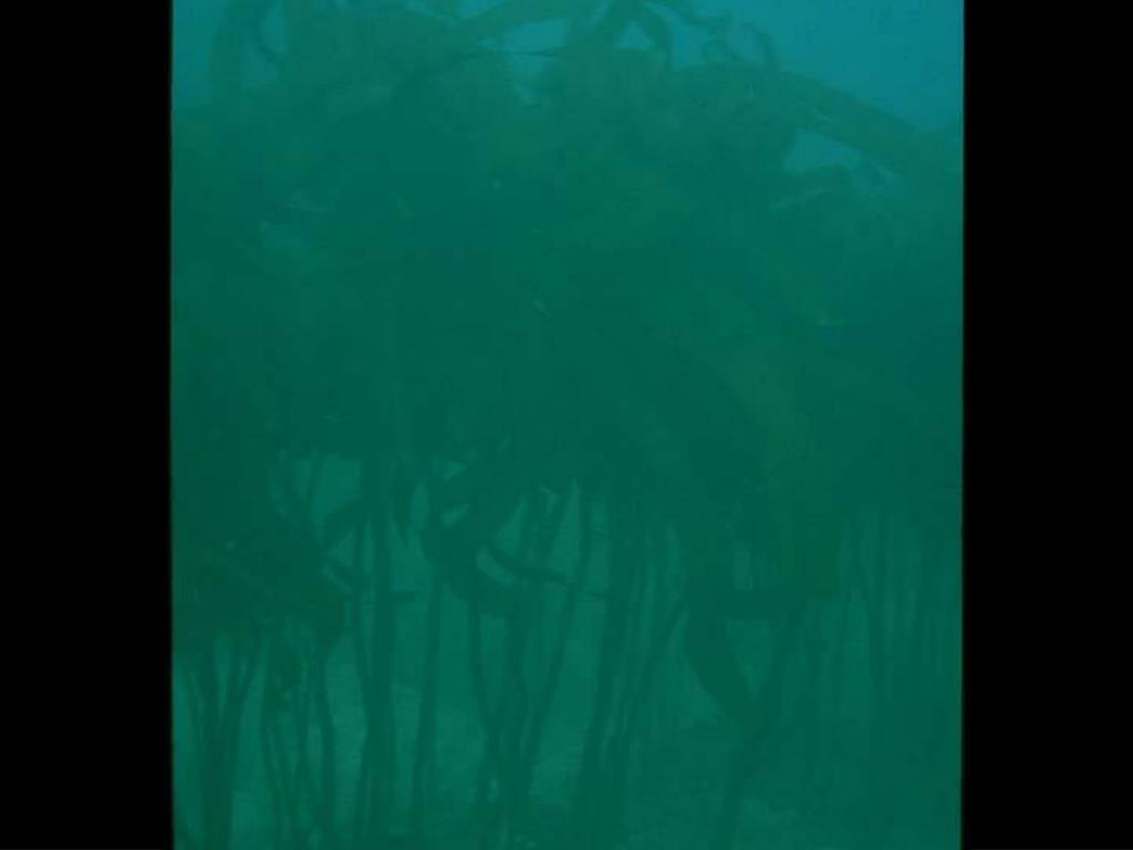 15. Kelp