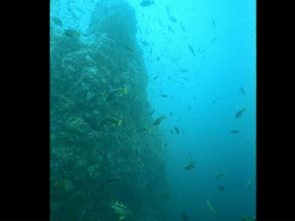 22. Yellowtail Rockfish