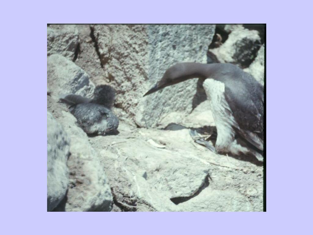 26. Seabird chick