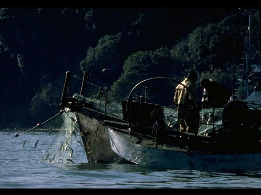 32. Herring Fishing in Tomales Bay