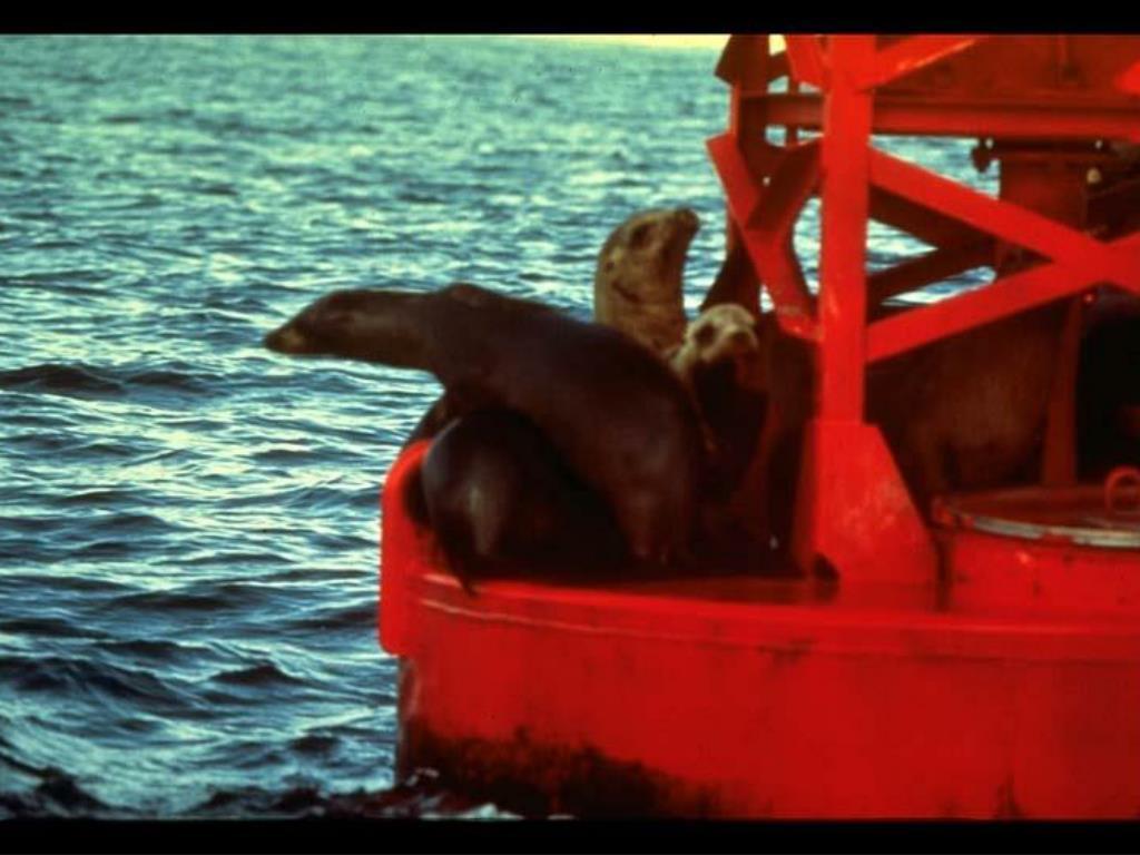 38. Sea lions on channel marker