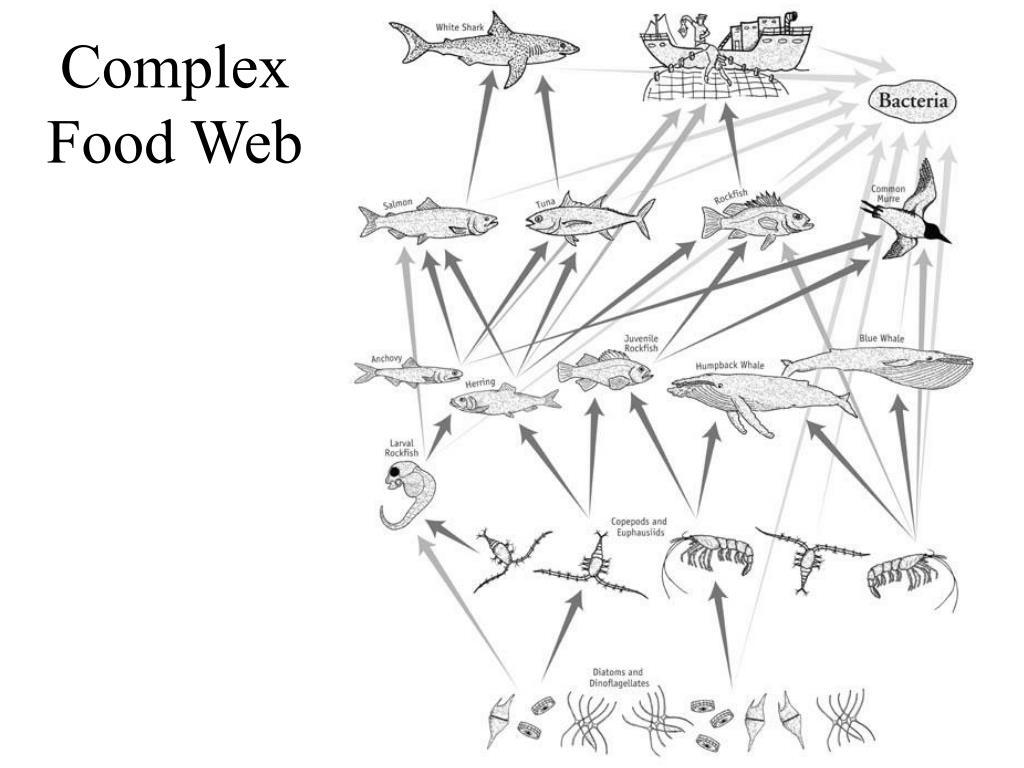 40. Complex Food Web