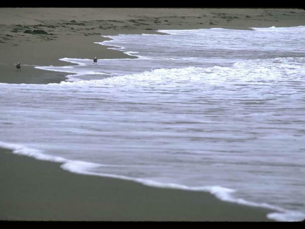 8. Sandy Shore