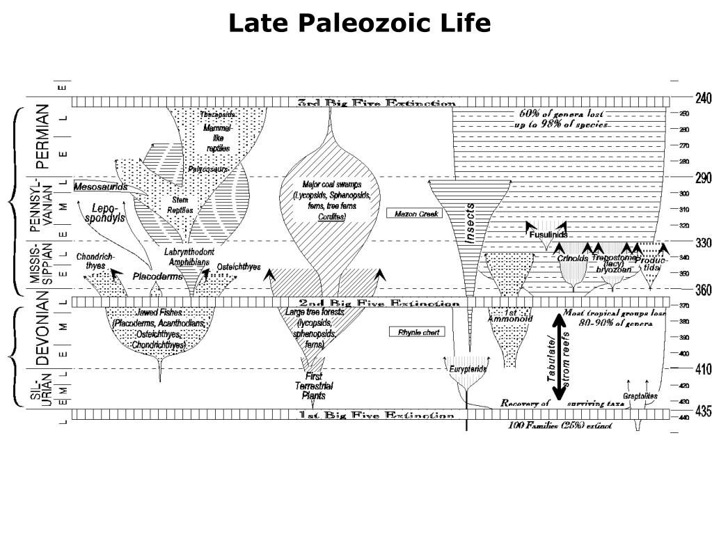 Late Paleozoic Life