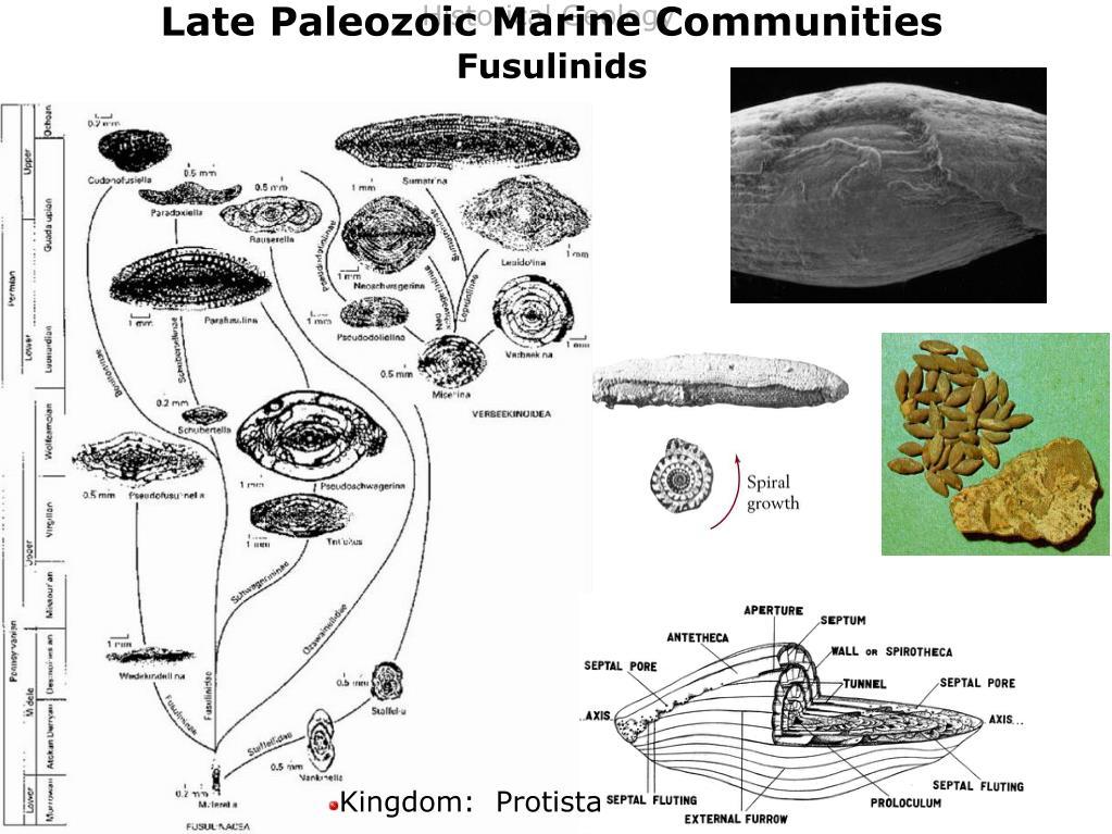 Late Paleozoic Marine Communities