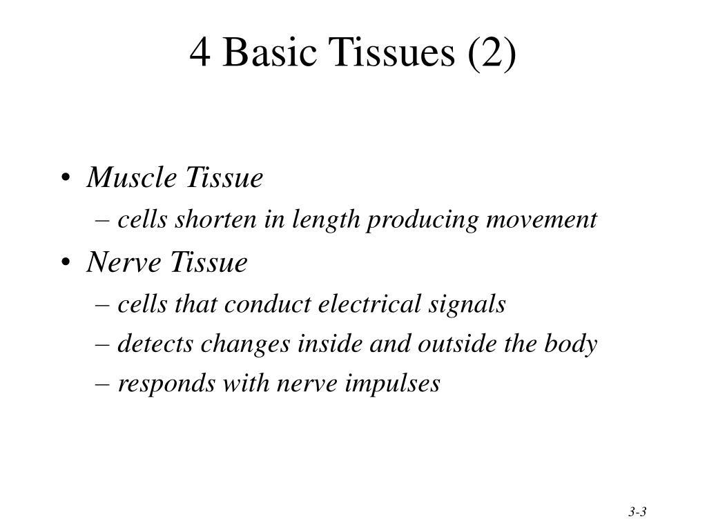 4 Basic Tissues (2)