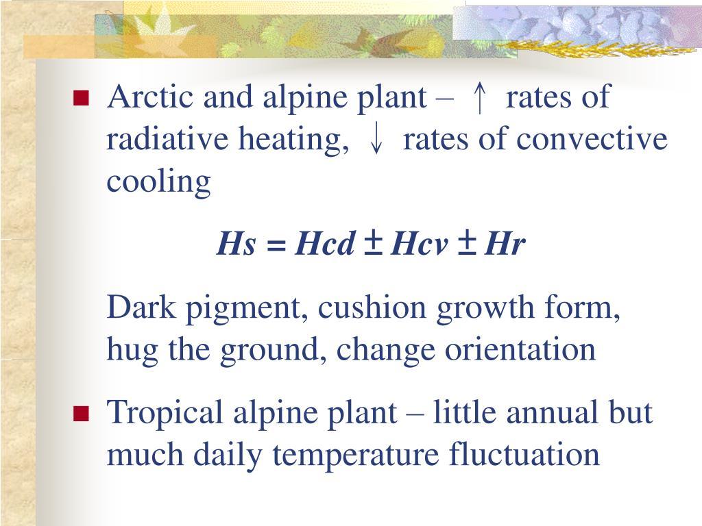 Arctic and alpine plant –