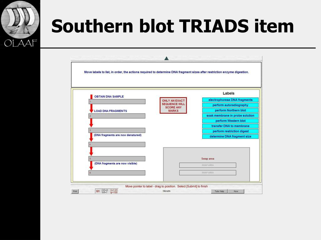 Southern blot TRIADS item