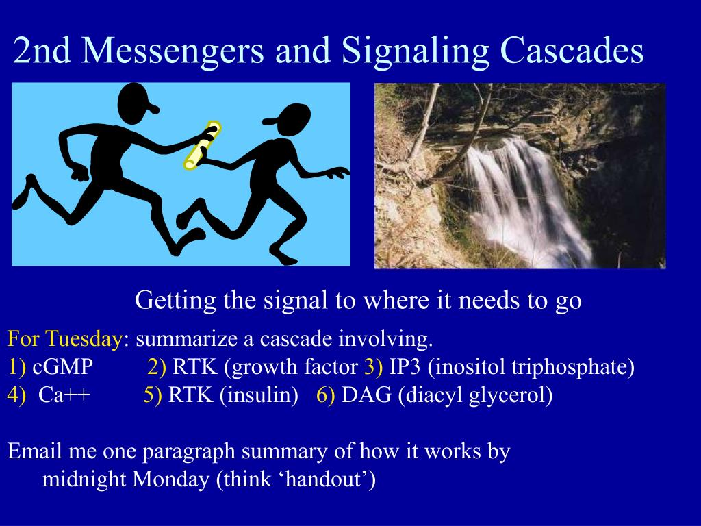 2nd Messengers and Signaling Cascades