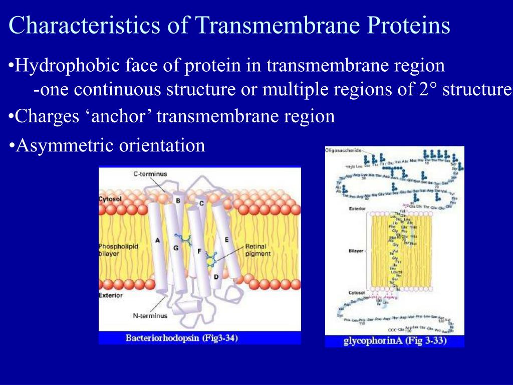 Characteristics of Transmembrane Proteins