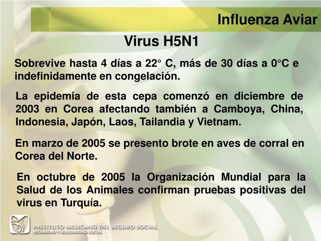 Virus H5N1