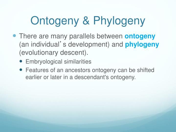 Ontogeny & Phylogeny