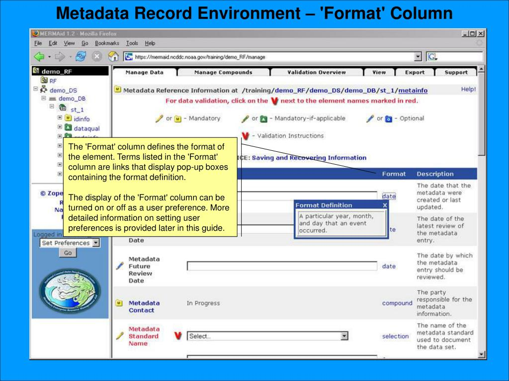 Metadata Record Environment – 'Format' Column