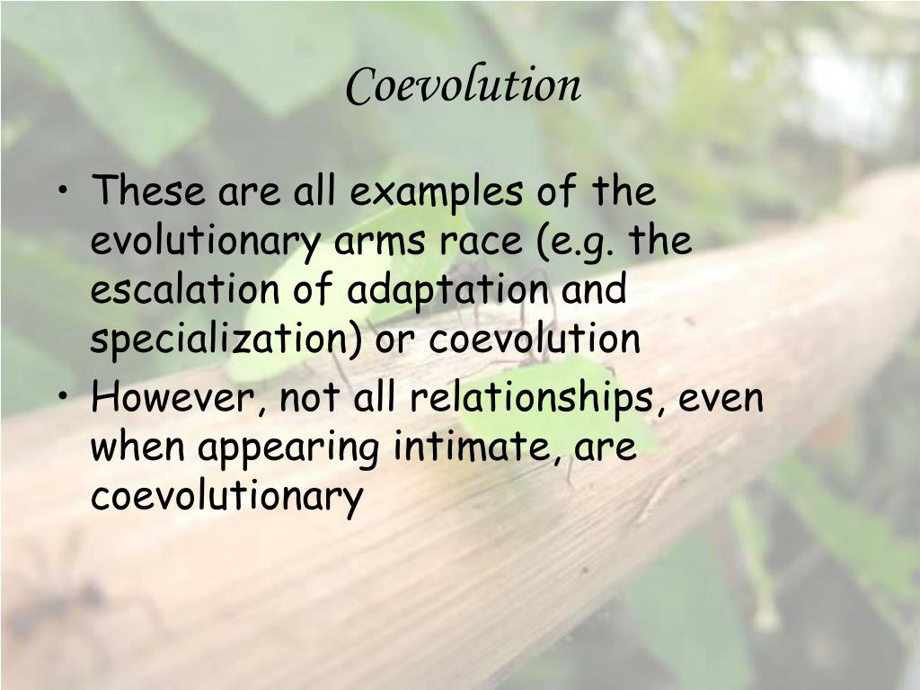 coevolution with particular reference to herbivory Introduction: plants, their herbivores, and predators all interact in obvious ways energy is transferred by the act of eating in addition, each group influences the quality of the populations of the others by chosing particular individuals to consume in a population in which the members differ in various ways, the consumer selects the better tasting or least bad-tasting or the ones easier.