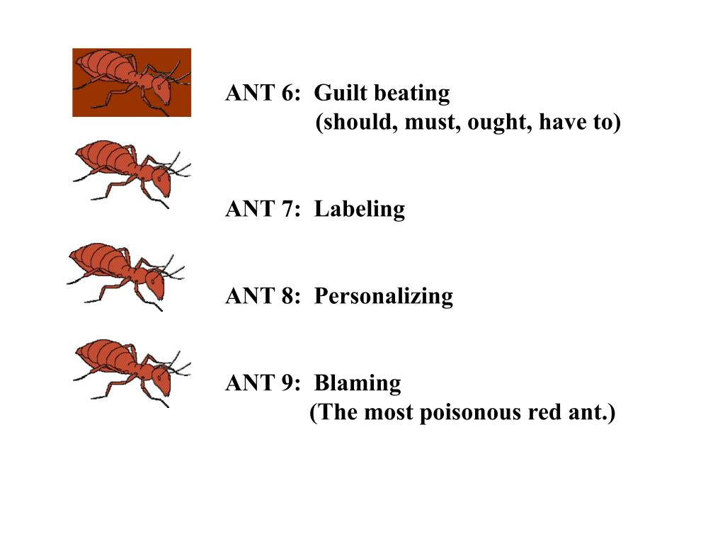 ANT 6:  Guilt beating