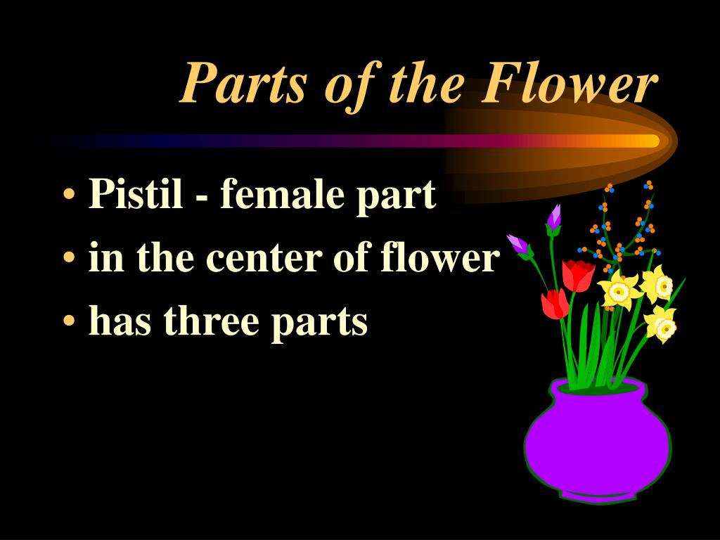 PPT Parts of the plant and their functions PowerPoint Presentation ID