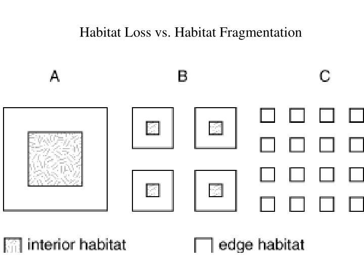 Habitat Loss vs. Habitat Fragmentation