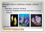 invertebrates15