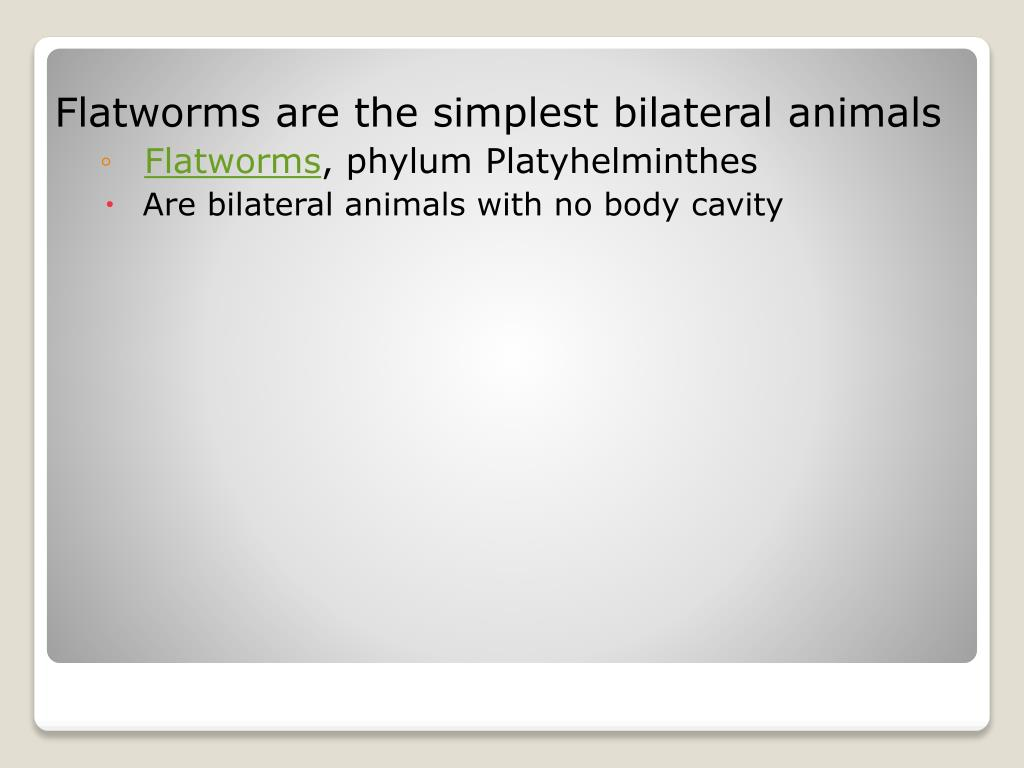 Flatworms are the simplest bilateral animals