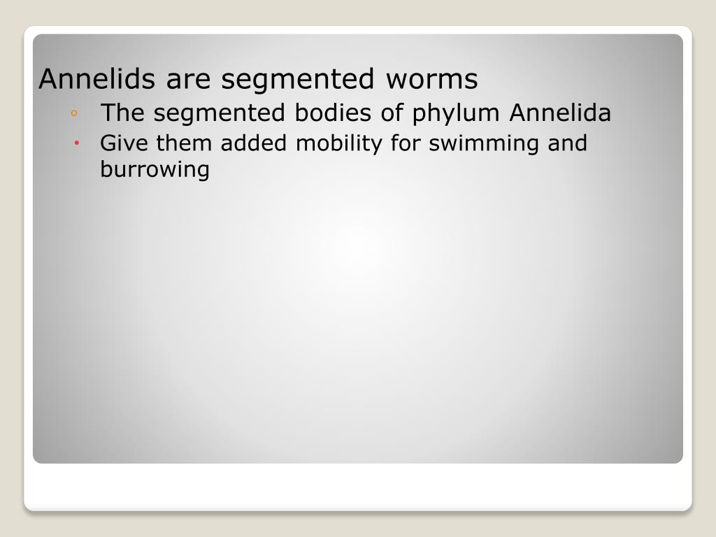 Annelids are segmented worms