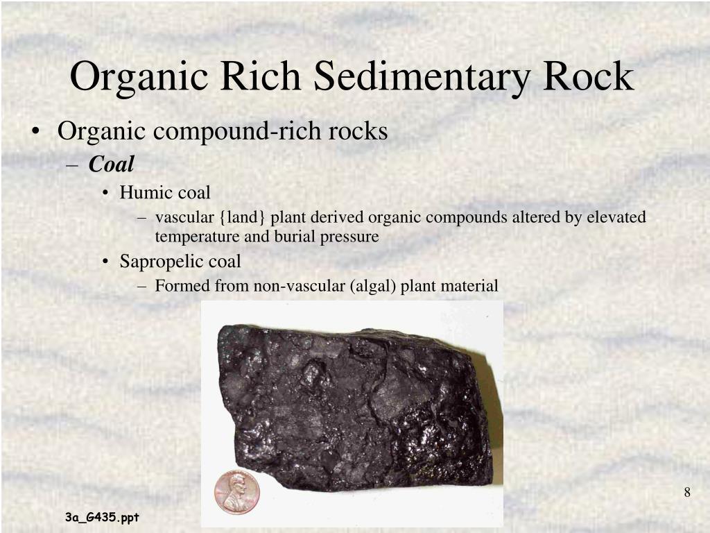 Organic Rich Sedimentary Rock