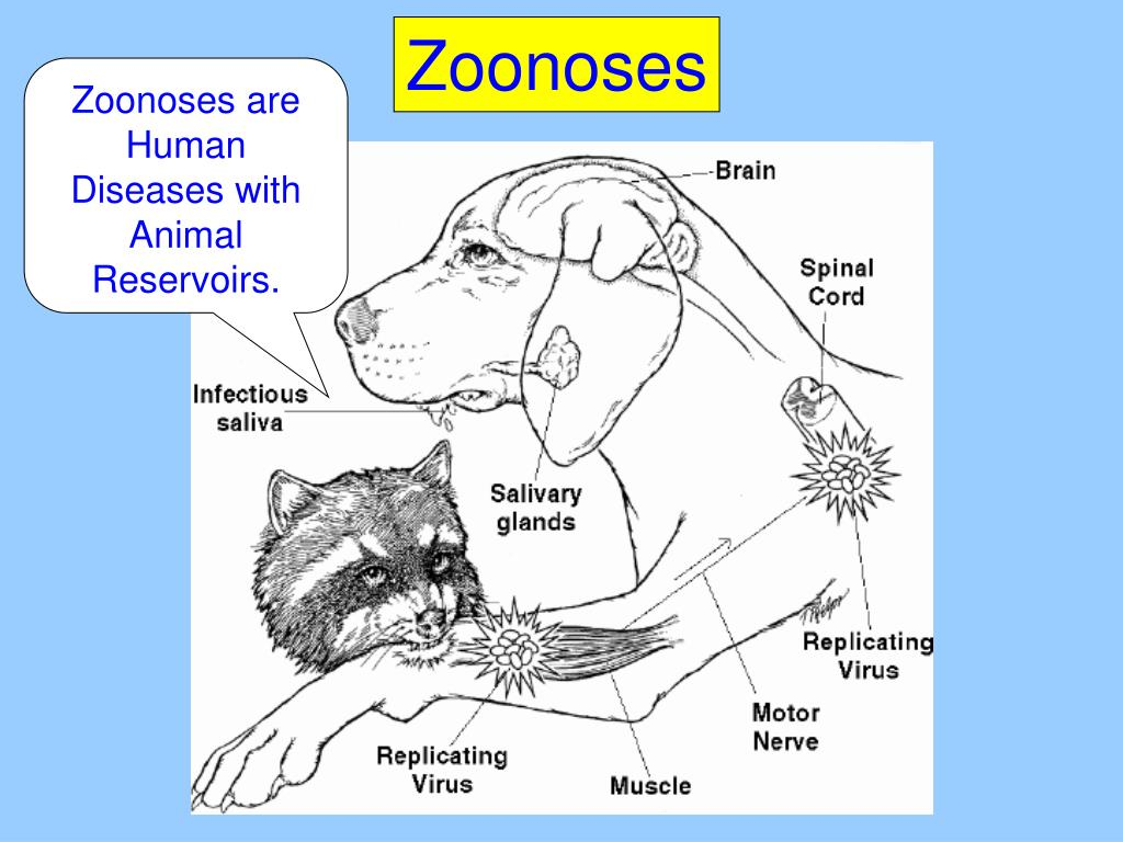 Zoonoses are Human Diseases with Animal Reservoirs.