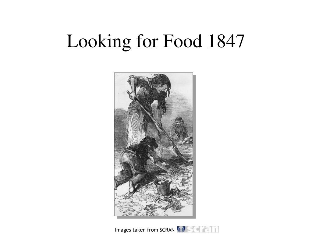 Looking for Food 1847