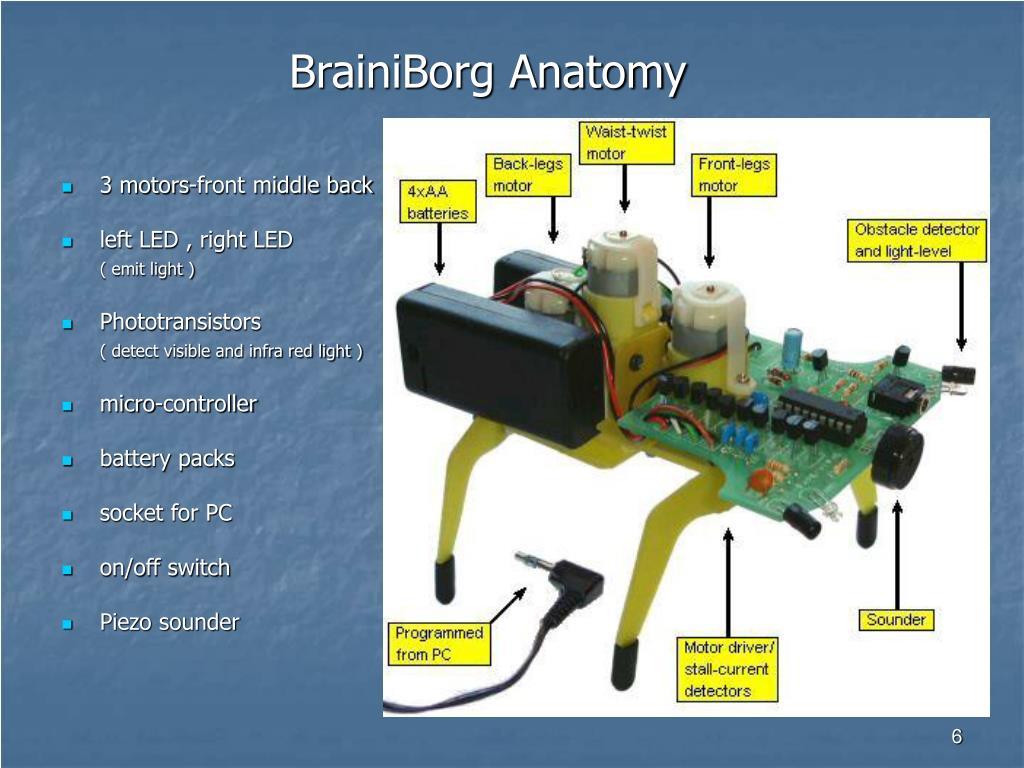 BrainiBorg Anatomy