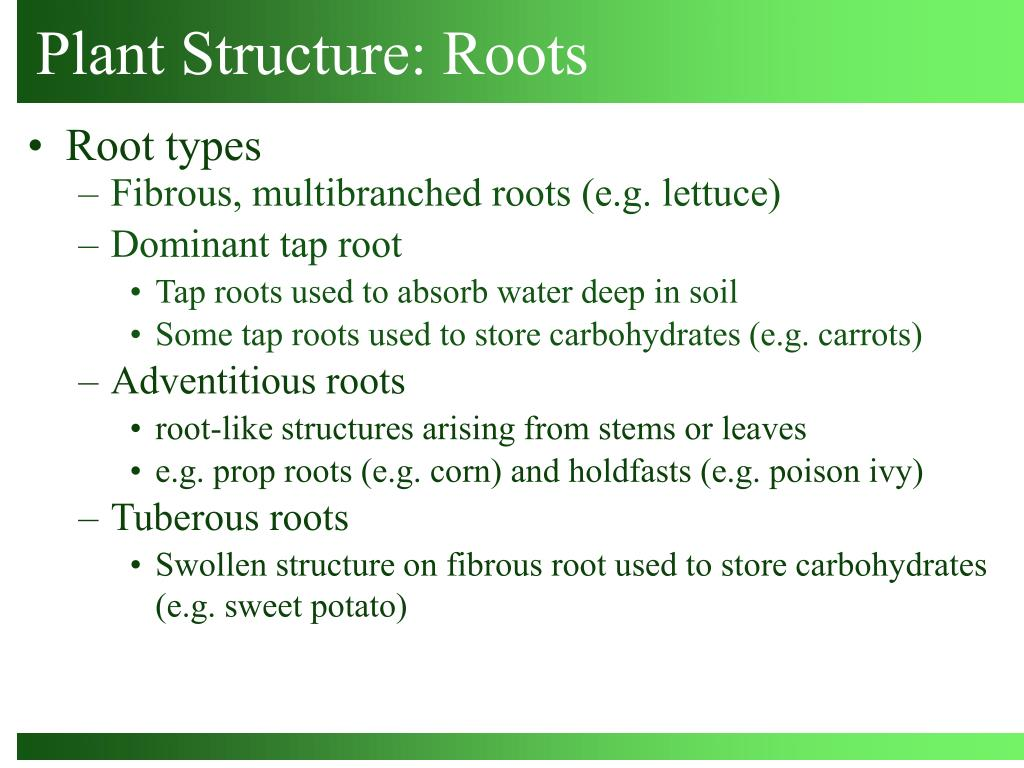 Plant Structure: Roots