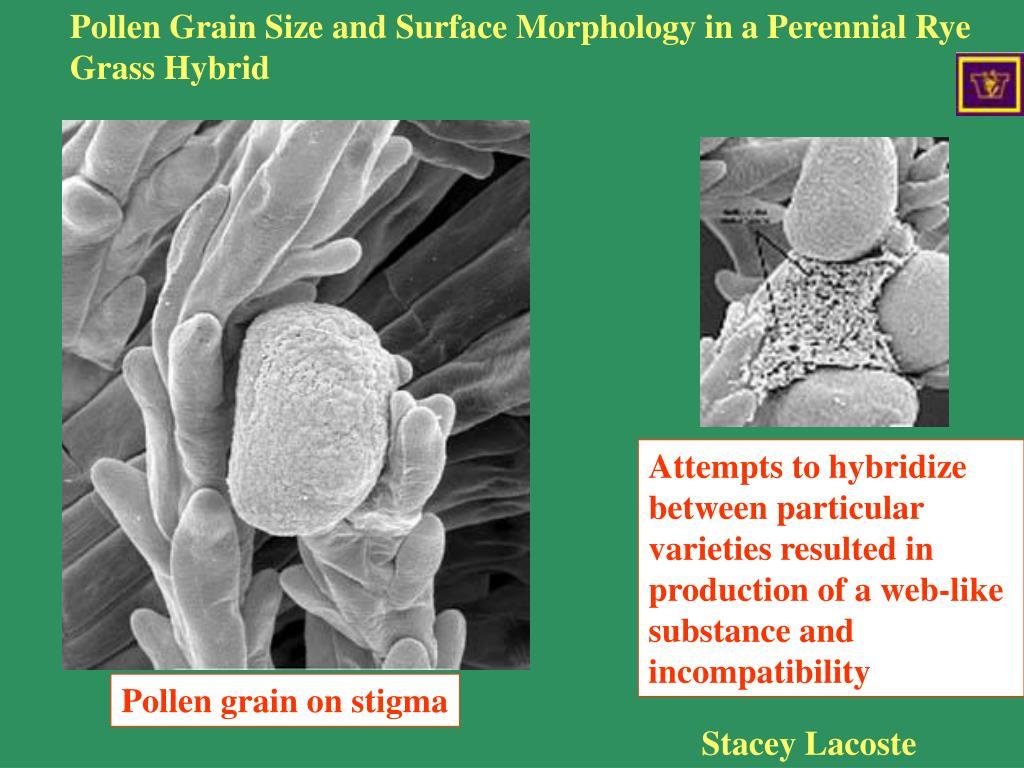 Rye grass incompatibility