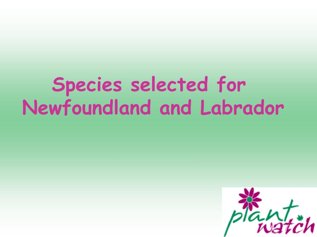 Species selected for