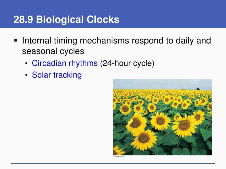28.9 Biological Clocks