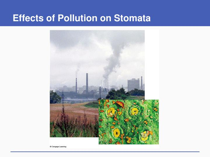Effects of Pollution on Stomata