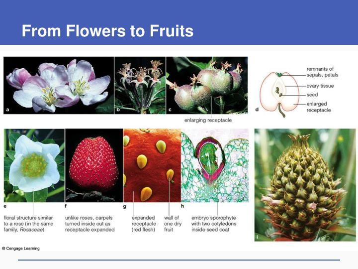 From Flowers to Fruits
