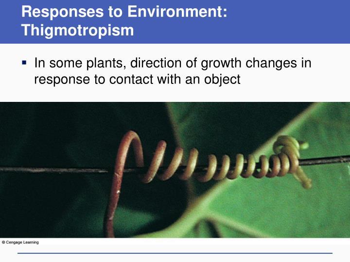 Responses to Environment: Thigmotropism
