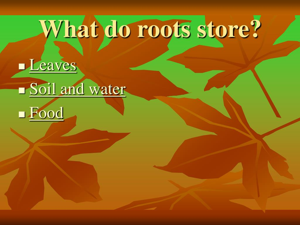 What do roots store?