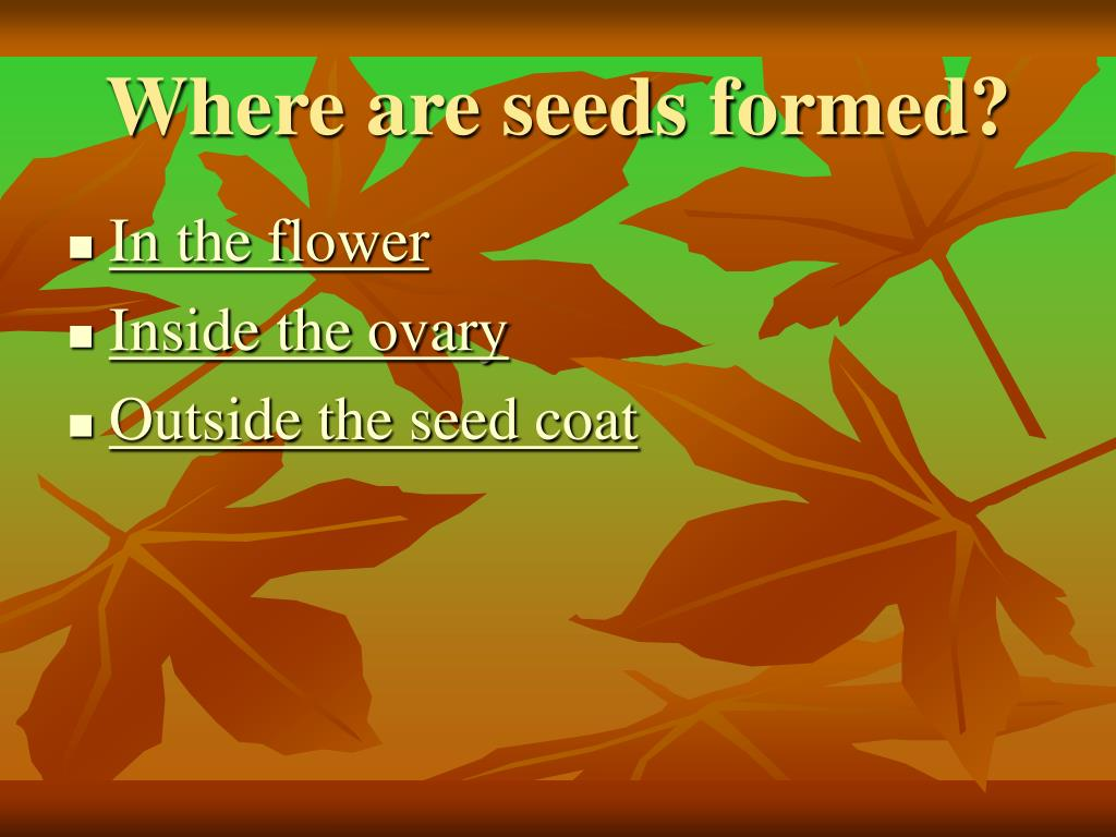 Where are seeds formed?