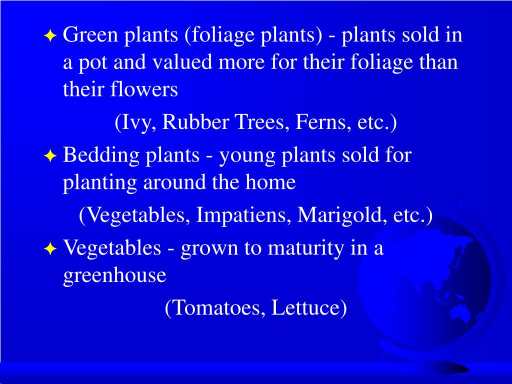 Green plants (foliage plants) - plants sold in a pot and valued more for their foliage than their flowers