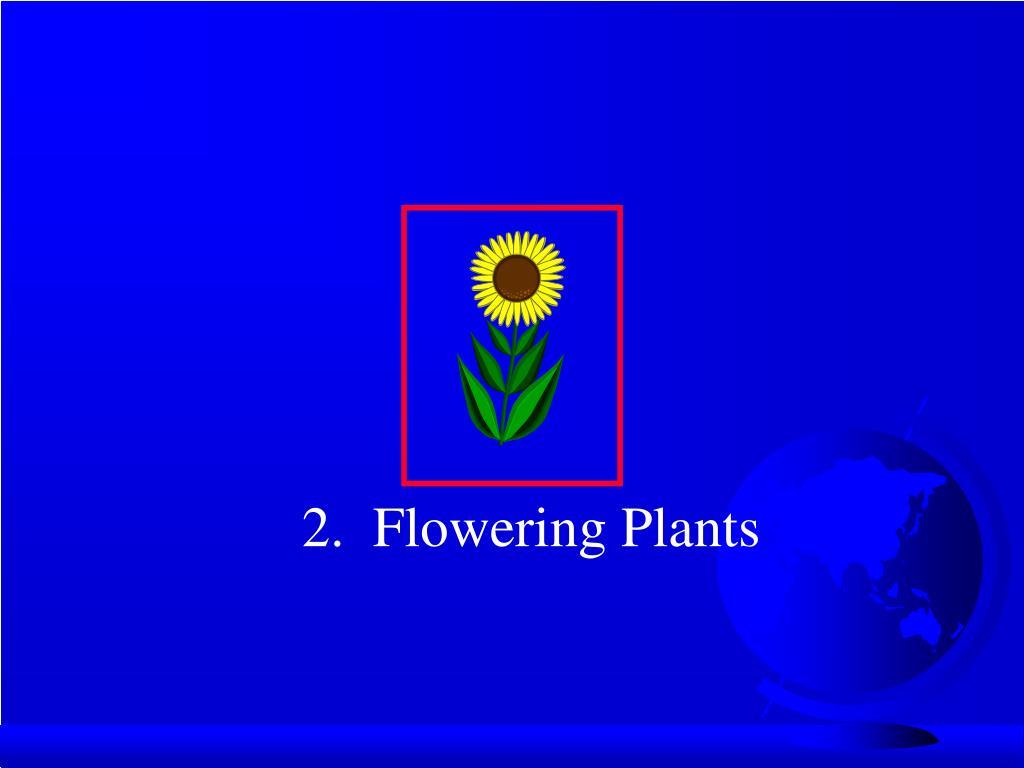 2.  Flowering Plants