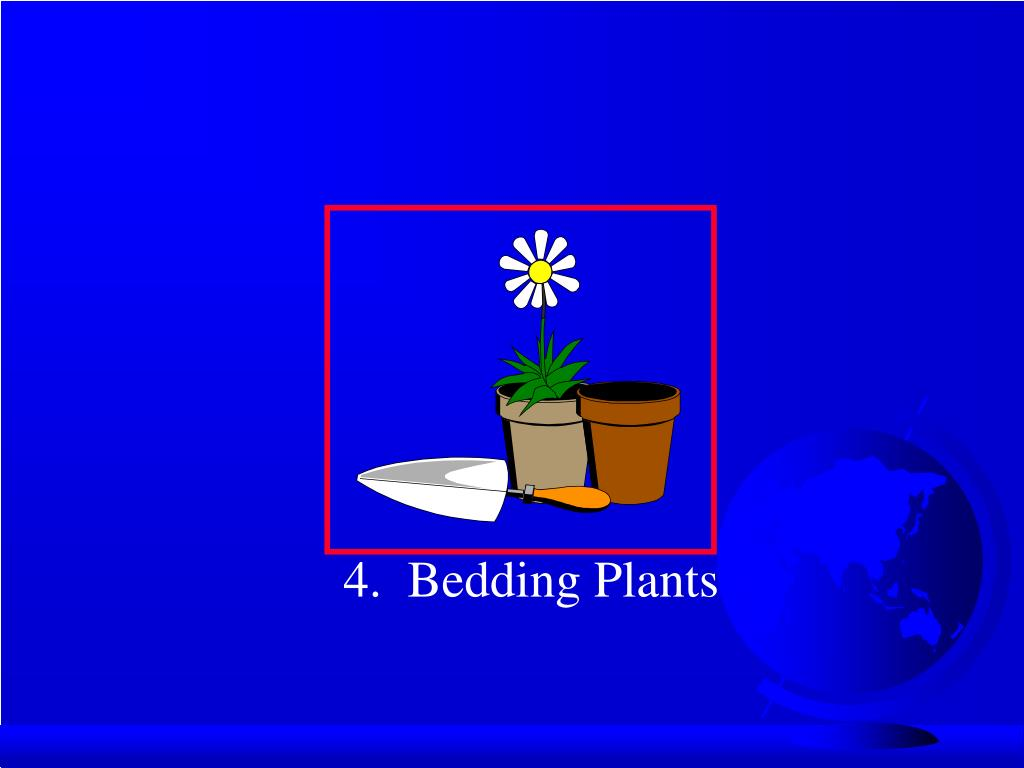 4.  Bedding Plants