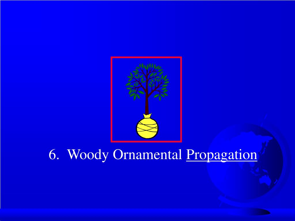 6.  Woody Ornamental
